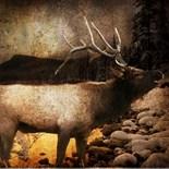 Elk Forest Vintage