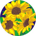 Circle Sun