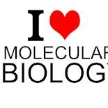 I Love Molecular Biology