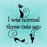 Humorous Cat Sayings