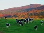 Farm Towns