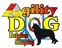 Belgian sheepdog Patches