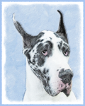 Great Dane - Multiple Illustrations