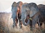 Elephants Low Poly Landscape