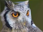 Owl Geometric Low Poly