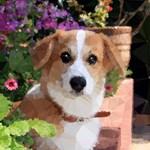 Flower Garden Dog Geometric Floral