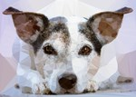 Dog with Brown Eyes Low Poly