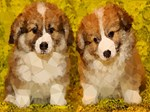 2 Cute Puppies Low Poly