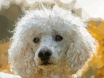 White Poodle Dog Low Poly