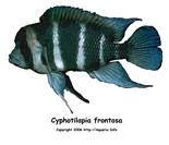 Fishgeeks