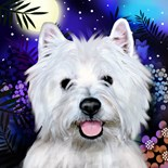 Highland Terriers