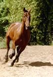 Horse Lover Art
