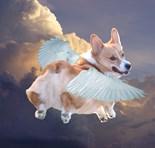 Funny Dog Art