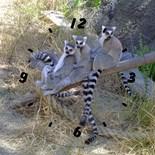 Zoo Photos