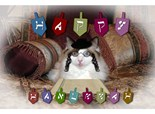Ragdoll Cat Lovers