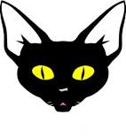 Unique Cat