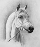 Arabian Headstudy