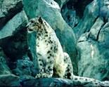 Animals Wild