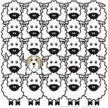 Pomeranian Dog Breed Illustration