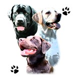 Labrador Retriever Group