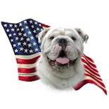 All American Bulldog