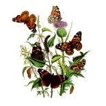 Butterfly Maternity