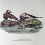 John J Audubon