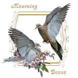 Birds Come Feeders
