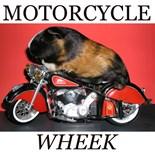 Motorcycles Animals
