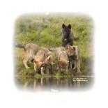 Wildlifegiftstore