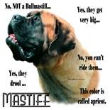Fluffy Mastiff