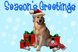 Labrador Retriever Holiday