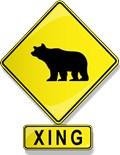 Bear Tees