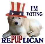 Political Presidential Election
