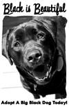 Black White Dog Art