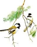 Birds Lover Gear