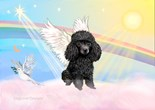 Poodle Angel