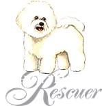 Bichon Rescue