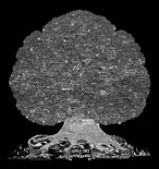 Burton Trees