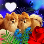 Pomeranian Art