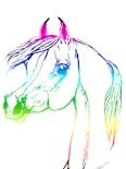 Arab Horse