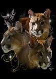 Wildlife Framed