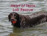 Lab Rescue
