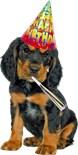 Birthday Dog Lovers