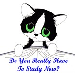 Do You Really Have Study Now