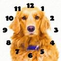 Golden retriever Basic Clocks