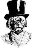 Sir Pug