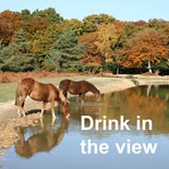 New Forest Pics