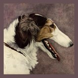 Wolfhound Purebreed