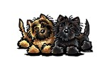 Cairn Terrier Lover